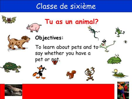 Tu as un animal? Classe de sixième Objectives: To learn about pets and to say whether you have a pet or not.