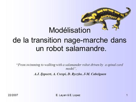 22/2007E. Layan & E. Lopez1 Modélisation de la transition nage-marche dans un robot salamandre. From swimming to walking with a salamander robot driven.