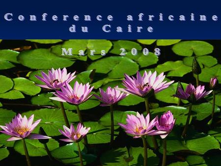 Conference africaine du Caire Mars 2008.