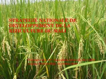 STRATEGIE NATIONALE DE DEVELOPPEMENT DE LA RIZICULTURE DU MALI