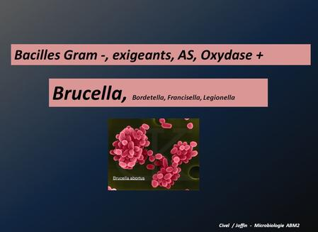Brucella, Bordetella, Francisella, Legionella Civel / Joffin - Microbiologie ABM2 Bacilles Gram -, exigeants, AS, Oxydase +