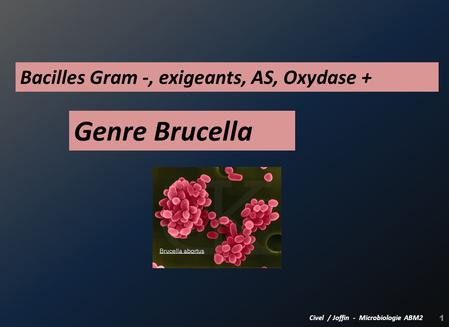 Genre Brucella Bacilles Gram -, exigeants, AS, Oxydase +
