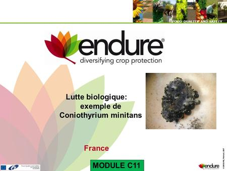 © ENDURE, February 2007 FOOD QUALITY AND SAFETY © ENDURE, February 2007 FOOD QUALITY AND SAFETY Lutte biologique: exemple de Coniothyrium minitans France.