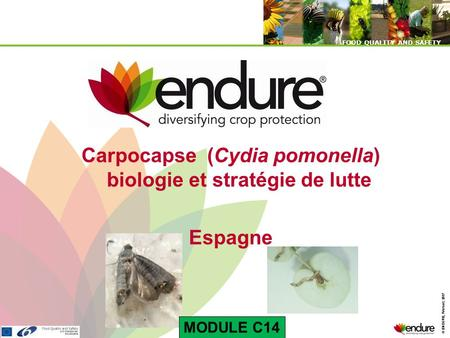 © ENDURE, February 2007 FOOD QUALITY AND SAFETY © ENDURE, February 2007 FOOD QUALITY AND SAFETY Carpocapse (Cydia pomonella) biologie et stratégie de lutte.
