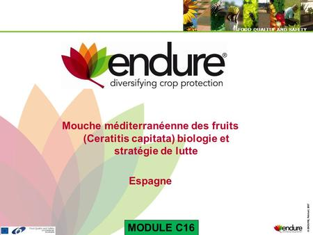 © ENDURE, February 2007 FOOD QUALITY AND SAFETY © ENDURE, February 2007 FOOD QUALITY AND SAFETY Mouche méditerranéenne des fruits (Ceratitis capitata)