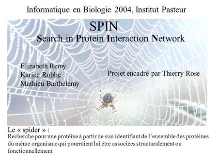 Informatique en Biologie 2004, Institut Pasteur Search in Protein Interaction Network SPIN Elizabeth Remy Karine Robbe Mathieu Barthelemy Recherche pour.