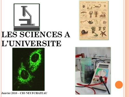LES SCIENCES A L'UNIVERSITE