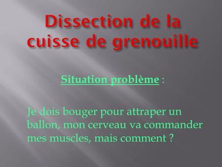 Dissection de la cuisse de grenouille