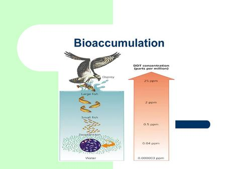 Bioaccumulation Image from.