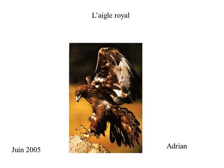 Laigle royal Adrian Juin 2005. 1. Description 2. Reproduction 3. Les parties de laigle royal 4. Les ennemis 5. Répartition et habitat 6. Nourriture 7.