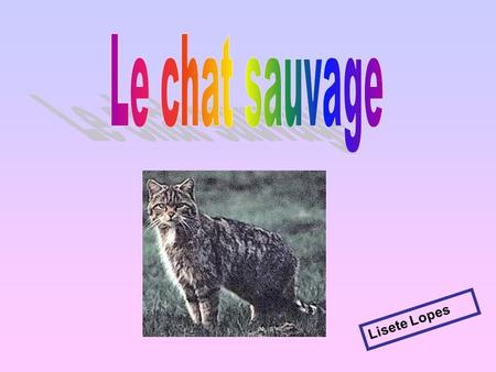 Le chat sauvage Lisete Lopes.