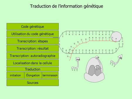 Traduction de l'information génétique