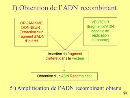1 I) Obtention de lADN recombinant ORGANISME DONNEUR : Extraction d'un fragment d'ADN d'intérêt VECTEUR (fragment d'ADN capable de réplication autonome)