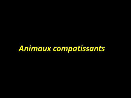 Animaux compatissants