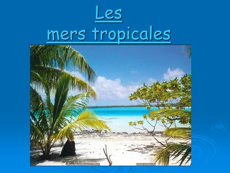 Les mers tropicales.