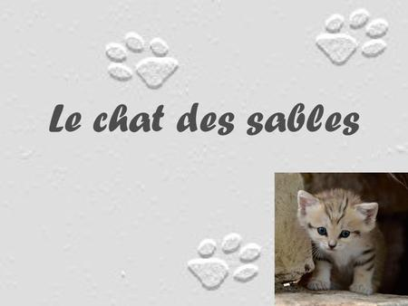 Le chat des sables.