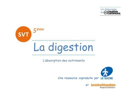 L'absorption des nutriments