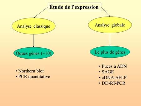 Analyse classique Analyse globale Northern blot PCR quantitative Puces à ADN SAGE cDNA-AFLP DD-RT-PCR Étude de l'expression Qques gènes (~10) Le plus de.
