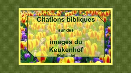 Citations bibliques images du Keukenhof