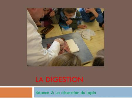 Séance 2: La dissection du lapin