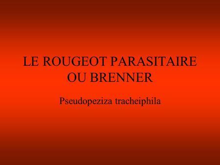 LE ROUGEOT PARASITAIRE OU BRENNER