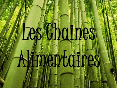 Les Chaines Alimentaires