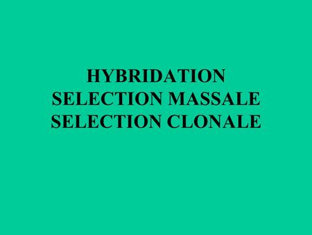 HYBRIDATION SELECTION MASSALE SELECTION CLONALE