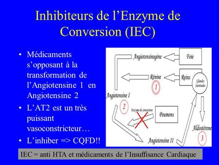 Inhibiteurs de l'Enzyme de Conversion (IEC)