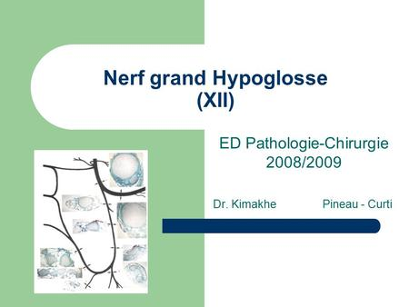 Nerf grand Hypoglosse (XII) ED Pathologie-Chirurgie 2008/2009 Dr. Kimakhe Pineau - Curti.