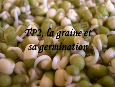 TP2, la graine et sa germination