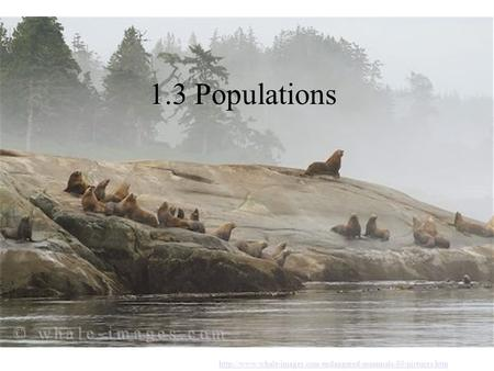 1.3 Populations http://www.whale-images.com/endangered-mammals-80-pictures.htm.