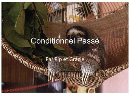 Conditionnel Passé Par Pip et Gracie. You would have done something in the past if something had been different. AUXILIARY VERB + P.P Followed with: 