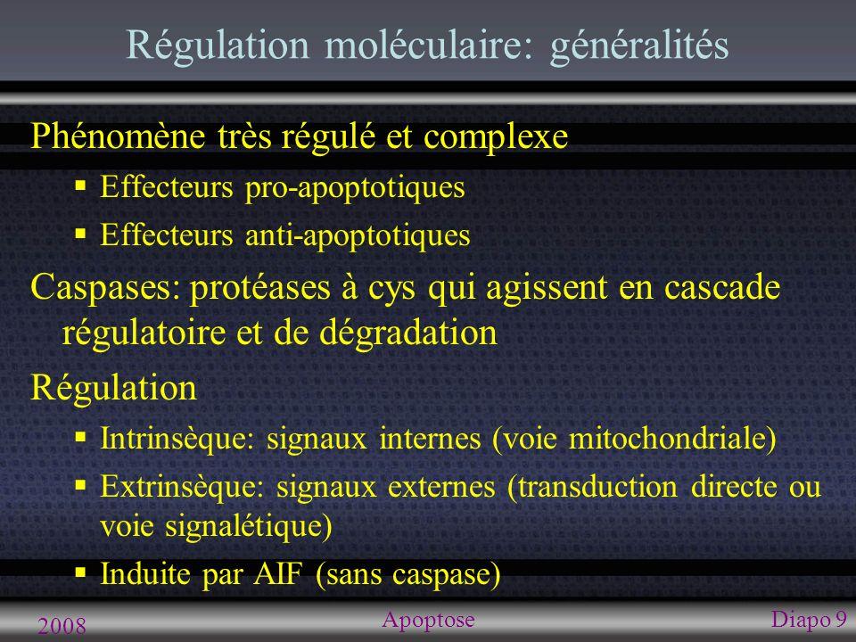 2008 ApoptoseDiapo 10 Principe de base Normalement équilibre entre facteurs Anti-apoptotiques (Bcl-2 et Bcl-xL) Homodimères (surface des mitochondries) Membrane mitochondriale stable Pro-apoptotiques (BAD, BAX, BID, BAK) si homodimères => membrane miochondriale externe est instable et se perfore => fuite de protéines de EIM Surplus d anti => pro ne se dimérisent pas