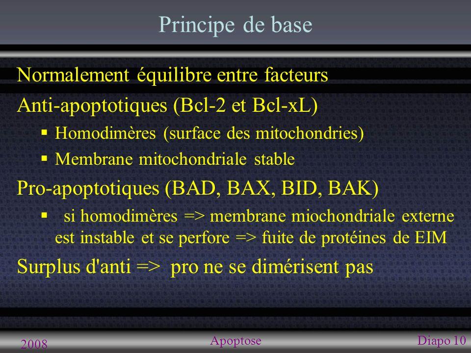 2008 ApoptoseDiapo 11 Induction de l apoptose Stress Facteurs anti- apoptotiques (Bcl-2, IAPS) Apoptose Voies de régulation de l apoptose Facteurs pro- apoptotiques (BAD, BAX, caspases) Facteurs trophiques