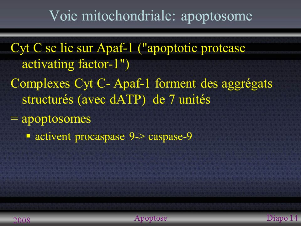 2008 ApoptoseDiapo 15