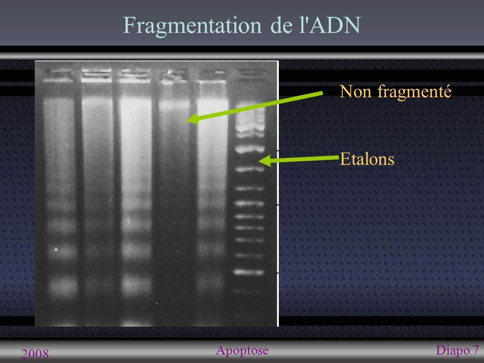 2008 ApoptoseDiapo 8 Stage final: phagocytose Phagocytose Phosphatidylsérine à la surface externe des membranes des vésicules Pas d inflammation