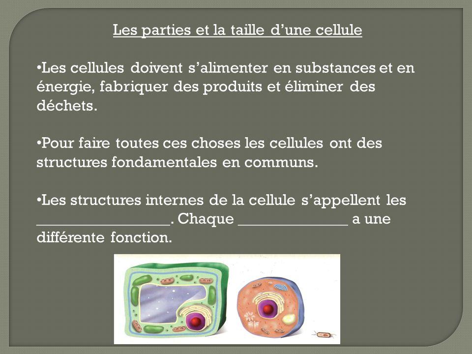 Il existe des cellules animales et des cellules végétales.