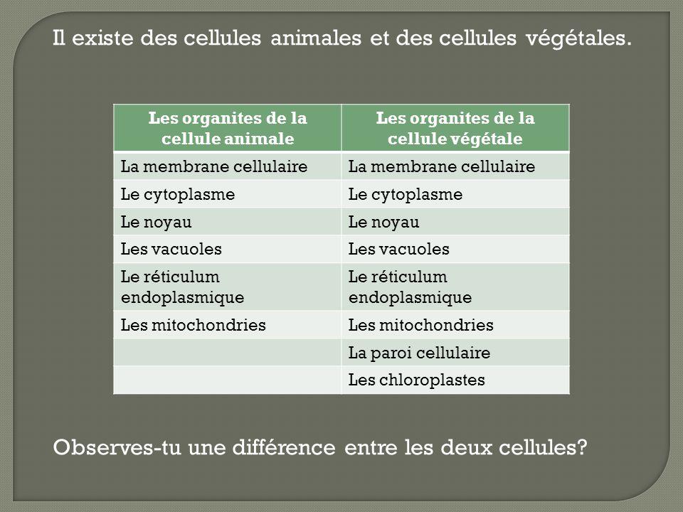 La cellule animale a moins dorganites que la cellule végétale.