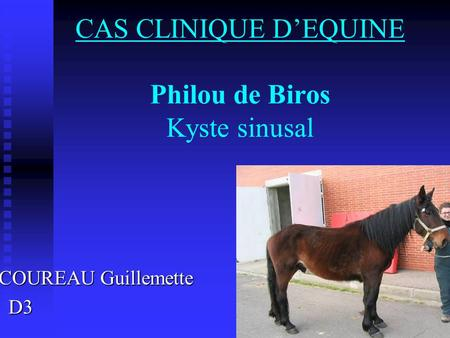 CAS CLINIQUE D'EQUINE Philou de Biros Kyste sinusal COUREAU Guillemette COUREAU Guillemette D3 D3.