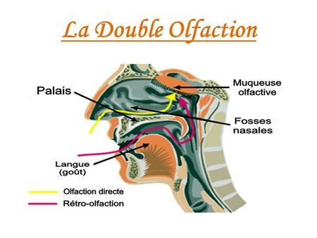 La Double Olfaction.
