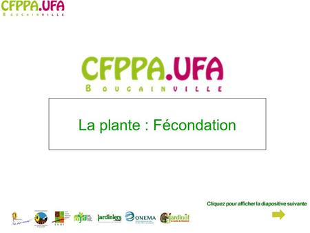 La plante : Fécondation