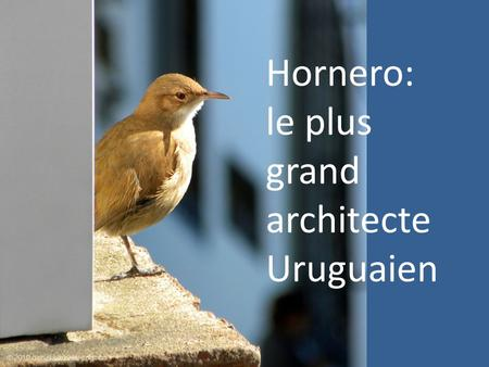 Hornero: le plus grand architecte Uruguaien.