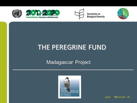 THE PEREGRINE FUND Madagascar Project par Marius R.