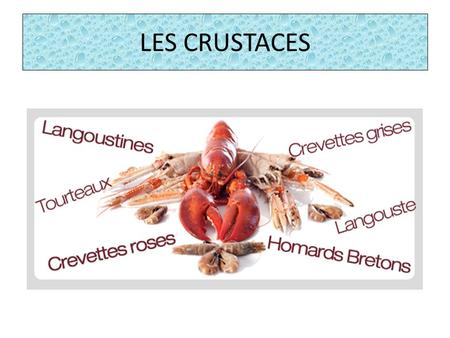 LES CRUSTACES. PLAN Introduction 1 – Description 2 – Habitat 3 – Reproduction 4 – Nourriture 5 – Dangers Conclusion Quizz Introduction 1 – Description.