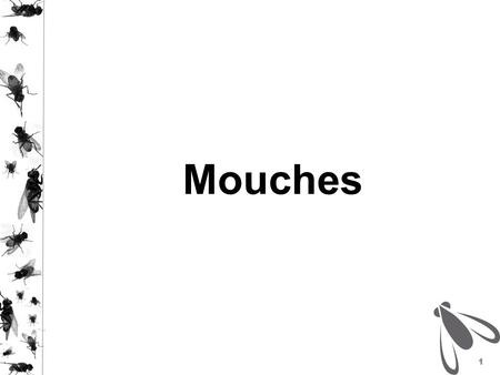 Mouches.