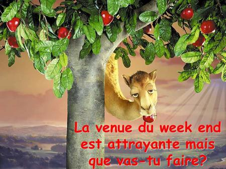 La venue du week end est attrayante mais que vas-tu faire?