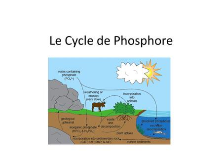 Le Cycle de Phosphore.