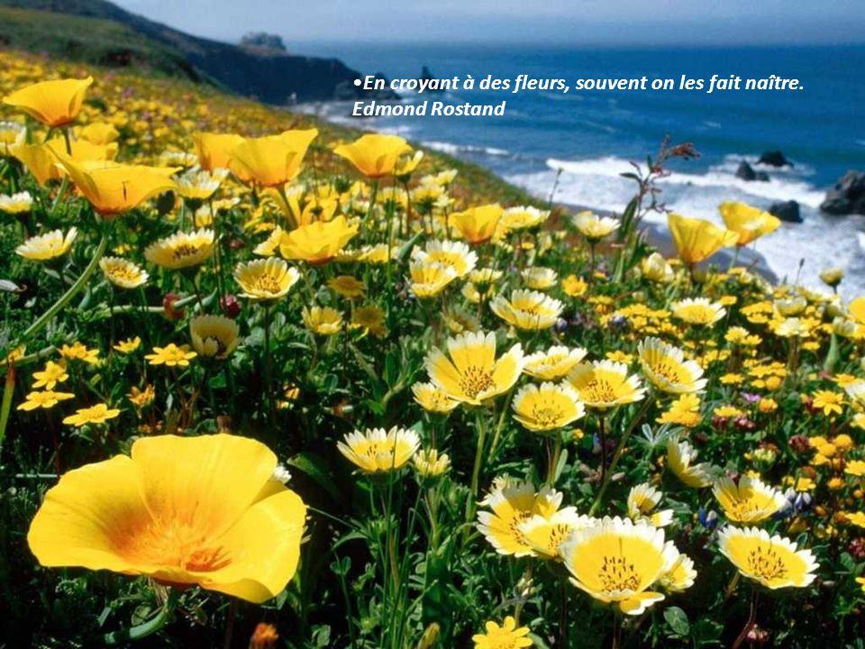 En croyant à des fleurs, souvent on les fait naître. Edmond Rostand
