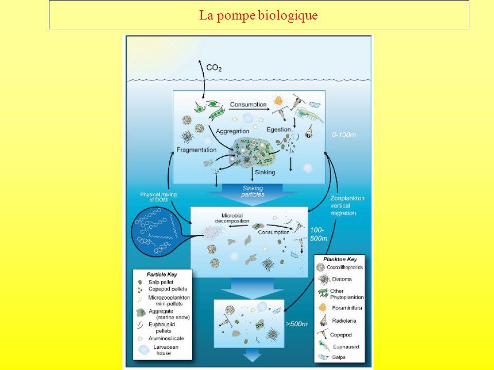 2) Importance de la taille dans lécosystème marin Couche de mélange Microbe Zooplancton Agregation – disagregation Matière en suspension Flux Algue Agrégats Respiration Sédiment Couche mésopélagique Le carbone est transporte par les grosses particules (>0.1cm).