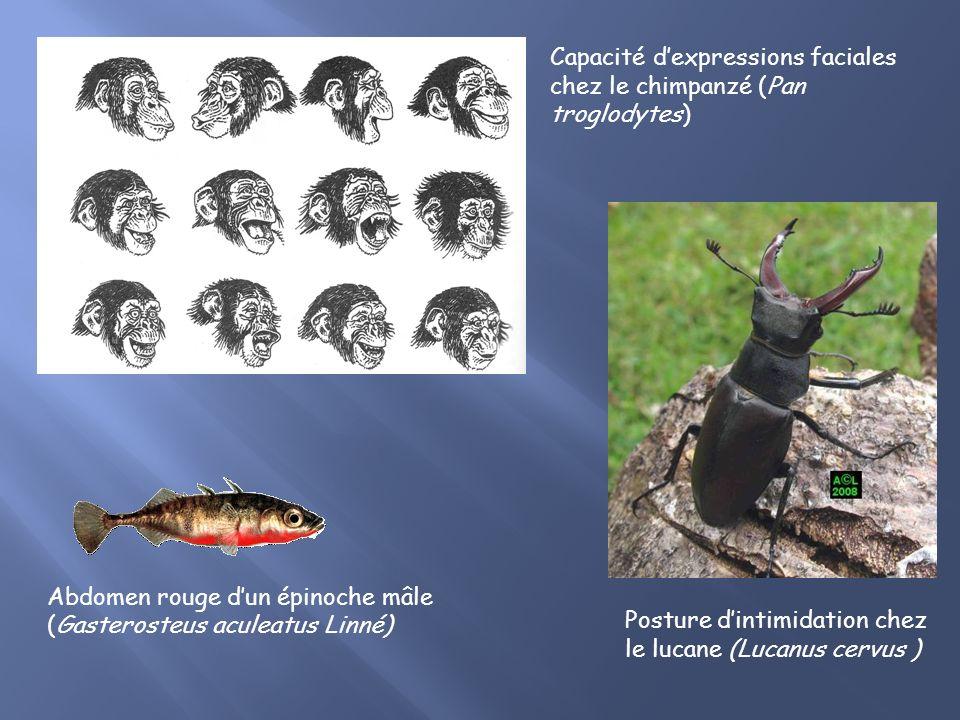 Posture dintimidation chez le lucane (Lucanus cervus ) Abdomen rouge dun épinoche mâle (Gasterosteus aculeatus Linné) Capacité dexpressions faciales chez le chimpanzé (Pan troglodytes)